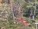 Japánkert képek az internetről - 1024x768 pixel - 429629 byte Gyepszegély