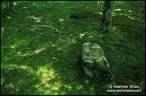 Japánkert képek az internetről - 712x467 pixel - 161749 byte Mágnesszelepek, szelepdoboz