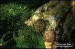 Japánkert képek az internetről - 714x467 pixel - 158521 byte Mágnesszelepek, szelepdoboz