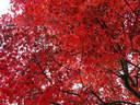 Japánkert képek az internetről - 1024x768 pixel - 471183 byte Lakópark I.