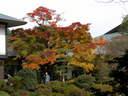 Japánkert képek az internetről - 1024x768 pixel - 358110 byte Lakópark I.