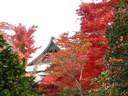 Japánkert képek az internetről - 1024x768 pixel - 403918 byte Kert készül Budakeszin