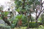 Japánkert képek az internetről - 1024x683 pixel - 603107 byte Mediterrán kerítés