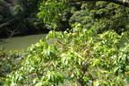 Japánkert képek az internetről - 1024x683 pixel - 513828 byte Mediterrán kerítés