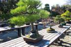 Japánkert képek az internetről - 1024x683 pixel - 538914 byte Mediterrán kerítés
